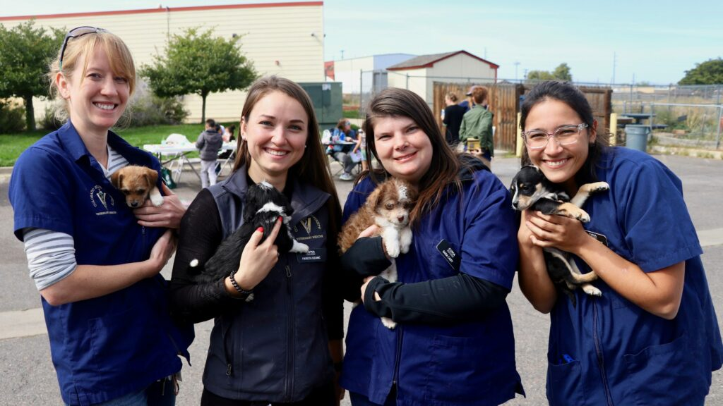 Four female veterinarians hold puppies