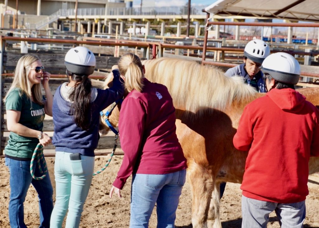 Students pet a brown horse